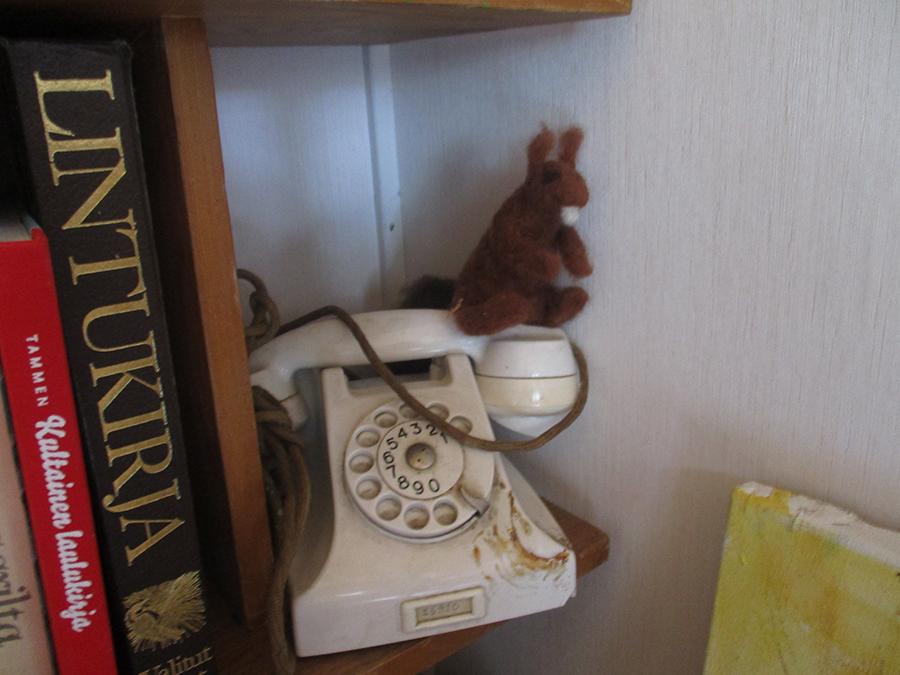 Orava odottaa soittoasi